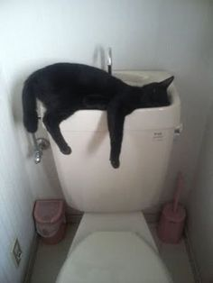 Raue Nacht für diese schwarze Miezekatze. :) Den Deckel konnte nicht heben aber noch geschafft, in der Toilette in Ohnmacht fallen. Mehr funnies von der Quelle, 25 Peinlich Cat Sleeping Positionen. Gepinnt von