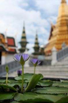 Lotus by randomix, via Flickr - Grand Palace, Bangkok, Thailand
