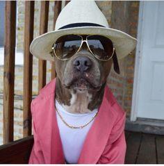 Bruno mars à du chien!