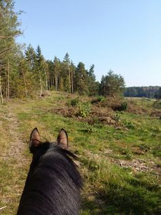 My halfblood mare Question and amazing view!