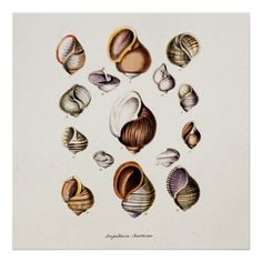 Vintage Sea Shells Personalized Retro Snail Shell Posters