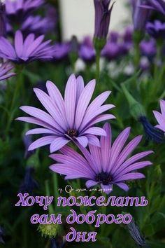 Plants, Ua, Montreal, English, Garden, Quotes, Dresses, Fotografia, Quotations