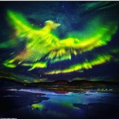 Northern lights in the shape of phoenix. ✨���� #iceland #travel #instagram #instadaily #instagramers #green #natureatitsbest #beautiful ✨ http://tipsrazzi.com/ipost/1525067182181280226/?code=BUqIIWkhWni