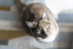 Harvey the two-faced cat #Cute