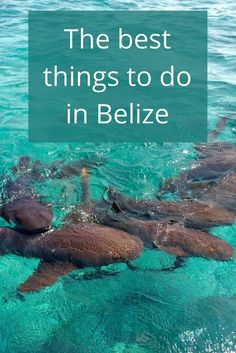 Adoration 4 Adventure's recommendations for the best things to do in Belize including activities in Caye Caulker, San Pedro, and San Ignacio.
