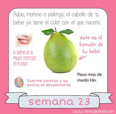 BebeBlog by mimuselina: Semana 23 embarazo. Tamaño y evolución del bebé @m...