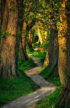 Se Deus encheu tua vida de obstáculos, é porque ele acredita na tua capacidade de passar por cada um.