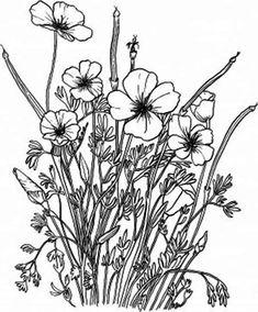 California Poppy California Poppy in the Garden Coloring Page: California Poppy In The Garden Coloring PageFull Size Image Poppy Coloring Page, Poppy Drawing, Garden Coloring Pages, California Poppy, Online Coloring, Colorful Garden, Coloring Sheets, Poppies, Backyard