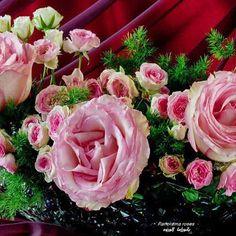 Panorama roses