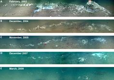 Decomposition of a whale carcass in Monterey Canyon over 7 years (Picture: MBARI).