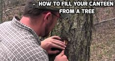 How to Fill Your Canteen from a Tree