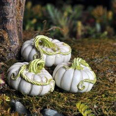 Find beautiful miniatures and fairy garden supplies in our online store. Miniature pumpkin picks, miniature garden features, fairy homes and more. Shop now.