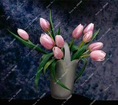 100 Pcs Netherlands Tulip seeds (Not Tulip bulbs) Potted Colors Tulips Fresh Seed Bonsai Flower Planted Holland Tulip Flowers