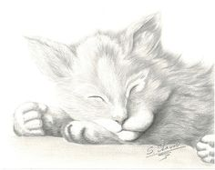 ORIGINAL art crayon dessin chat - portrait d'animaux de compagnie, chaton animaux, dessin animaux cat, dessin chaton animaux cozy chat, chaton, de couchage