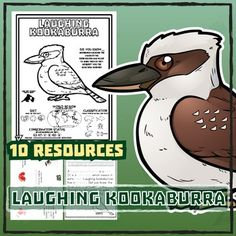 Laughing Kookaburra -- 10 Resources -- Coloring Pages, Reading & Activities