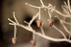 A Thankful Tree using acorns as ornaments. Gorgeous! #diy