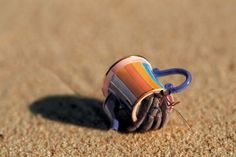 That is repurposed. Hermit crab.