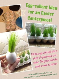 I'm going to plant my seeds in egg shells this year!