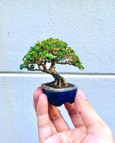 Mame Bonsai, Bonsai Art, Planter Pots, Driftwood, Benz, Purpose, Instagram, Style, Swag