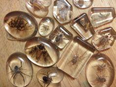 bugs in resin tombs