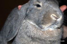 """""""You will pet me until I instruct you to stop.  Then, you will cut off that hand and burn it.""""     Disapproving Rabbits"""