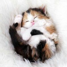 Adorable Calico Kitten... Sweetness,,