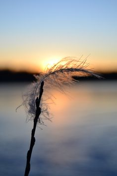 sunset and feather Feather, Celestial, Explore, Sunset, Winter, Nature, Photography, Outdoor, Winter Time