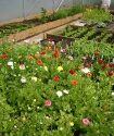 The real cut flower garden