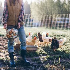 Lady farmer in jeans and flannel, gorgeous morning light and chickens in all colours!