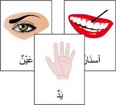 """Cartes de nomenclature """"le corps humain"""" en arabe / imagier                                                                                                                                                                                 Plus"""