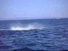 #Monterey  #WhaleWatching #California