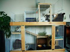 This site has detailed instructions and material list for building a rabbit condo.  I like the one pictured, however, I could not find it on the site.