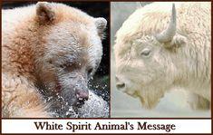 Inspires Vibrational Energy Self-Healing Practices Animal Spirit Guides, Spirit Animal, White Spirit, Power Animal, Bison, Polar Bear, Angels, Spirituality, Eyes