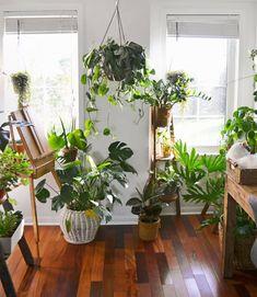 houseplants (@studioplants)