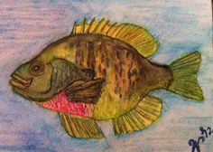 Watercolor Bream