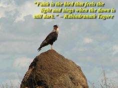 """""""Faith is the bird that feels the light and sings when the dawn is still dark."""" ~ Rabindranath Tagore quote"""