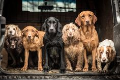 First place, Dogs at Work: a group shot of spaniels and retrievers