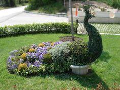 Peacock | Topiary Bulgaria | Топиари2816 x 2112 | 3.7 KB | topiarybg.com
