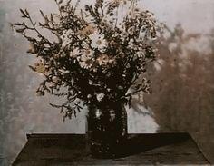 Flowers, Wilting, Death, GIF