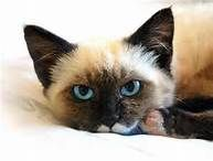 cute cat pictures - Bing Images