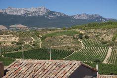 Viñedos de la Rioja España