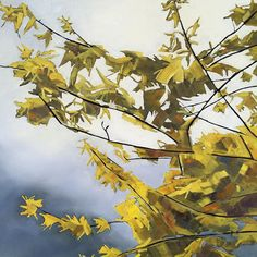 "Blossoms on Grey  - Forsythia   10""x10"" giclee print"