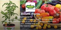 Monday 3/4/2013 on #gardenchat Twitter with @Bonnie Plants >  Click to see transcript conversation from event!