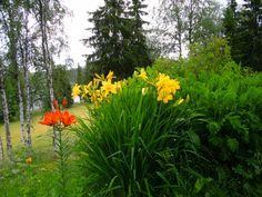Dagliljor och brandlilja