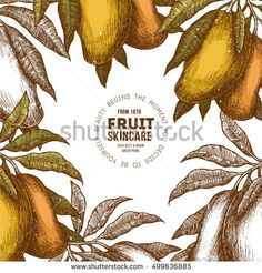 Find Mango Tree Vintage Design Template Botanical stock images in HD and millions of other royalty-free stock photos, illustrations and vectors in the Shutterstock collection. Mango Fruit, Mango Tree, Cute Fruit, Tree Illustration, Vintage Illustrations, Syrup, Vintage Designs, Royalty