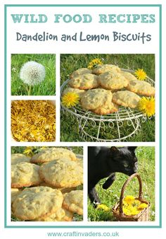 Dandelions are one of the easiest wild flowers to identify, so are a perfect place to start if you want to cook with wild food. Get out and forage some today and try our wonderful Dandelion and Lemon Biscuit recipe. Pavlova, Lemon Biscuits, Dandelion Jelly, Dandelion Recipes, Edible Wild Plants, Flower Food, Cactus Flower, Wild Edibles, All Nature