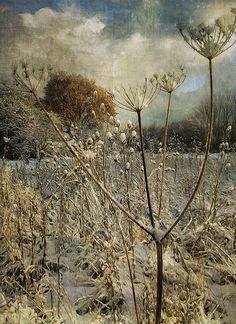 Winter in the Meadow