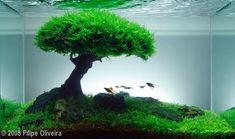 2008 AGA Aquascaping Contest - Entry #64