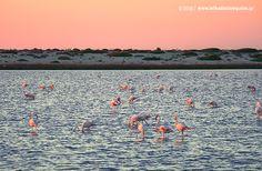 Flamingos στη λιμνοθάλασσα.