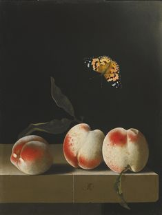 Adriaen Coorte: 1660 (?) - after 1707. Three Peaches on a Stone Ledge with a Red Admiral Butterfly.